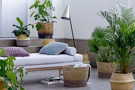 décoration d'intérieur avec des plantes d'intérieur accompagné des ces pots design