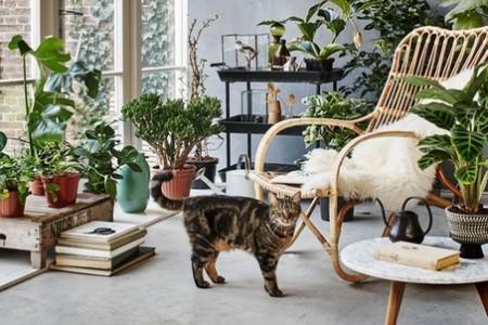 plantes, chat, décoration d'intérieur, déco, design, coup de coeur design