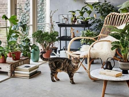 Tendance décoration avec des plantes d'intérieur